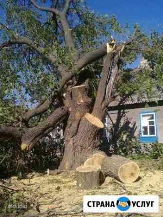 Спил деревьев любой сложности, вывоз мусора, дрова Нижний Новгород