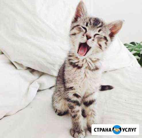 Домашняя передержка кошек и котов Пушкин
