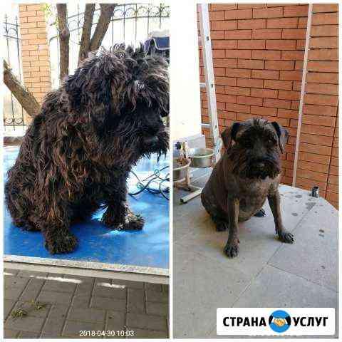 Стрижка собак и кошек с выездом на дом Новочеркасск