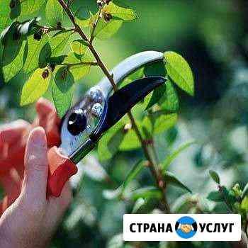 Обрезка плодовых деревьев и вынограда Хасавюрт