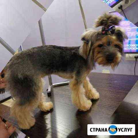 Стрижка собак,кошек с выездом Уфа