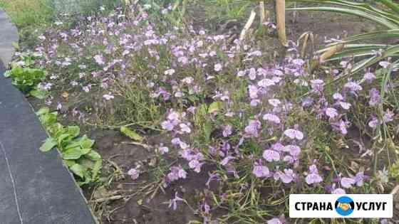 Озеленение, посадка цветов Железногорск