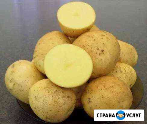 Картофель крупный, картошка, доставка Прокопьевск