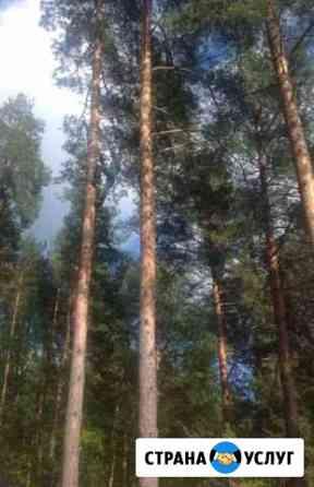 Спил, распил деревьев. Покос травы триммером Бердск