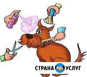 Стрижка собак и кошек Тольятти