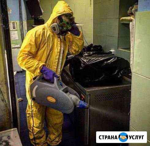 Уничтожение клопов,тараканов, муравьев Новосибирск