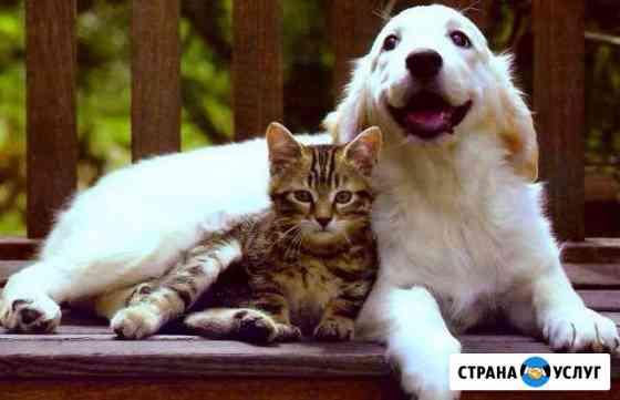 Передержка животных на время отъезда Сыктывкар