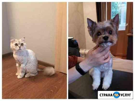 Стрижка кошек и собак Санкт-Петербург