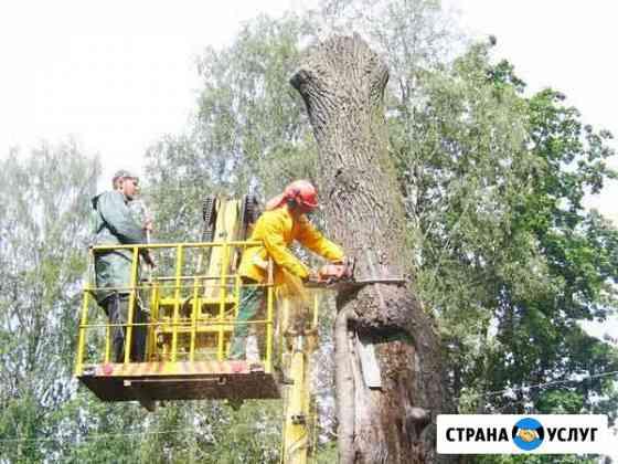 Спил деревьев и покос травы Пятигорск
