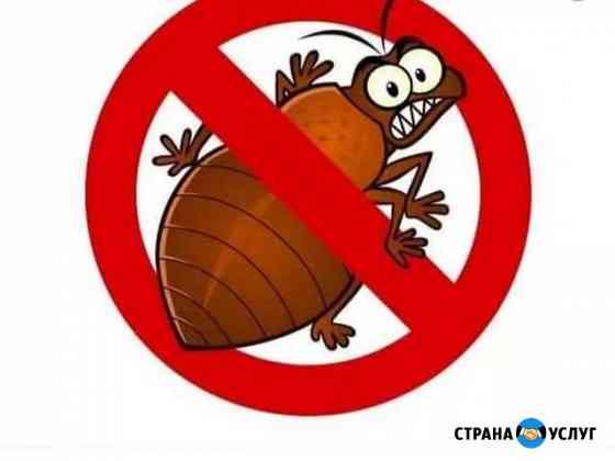 Уничтожение тараканов, клопов, грызунов Иркутск
