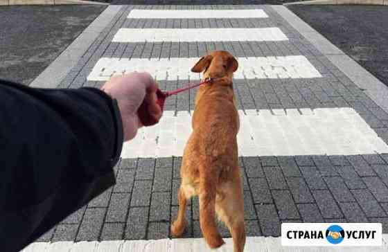 Выгул собак Волгоград