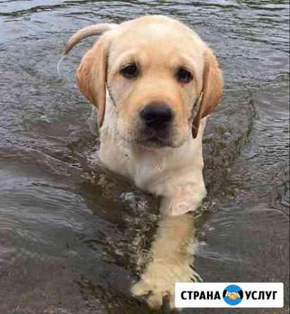 Выгульщик собак Пермь