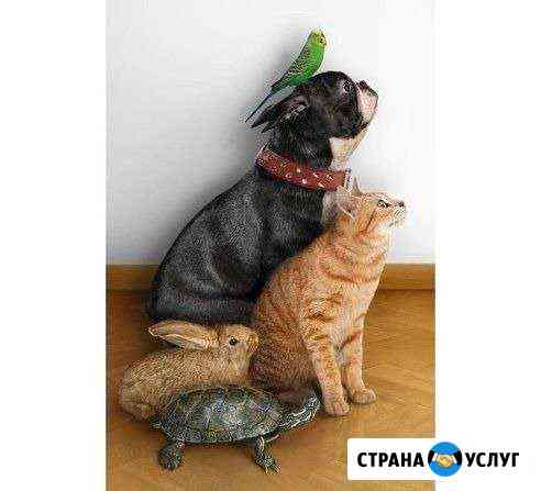 Ветеринарный врач Омск