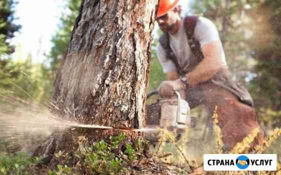 Бригада в лес вальщиков, лесозаготовка, лэп Киров
