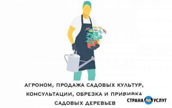 Услуги профессионального агронома, консультации Оренбург