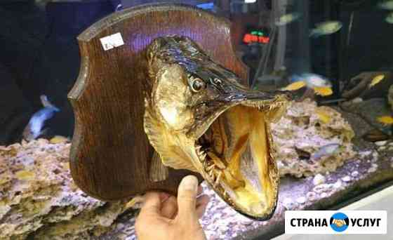 Чучело щуки Иваново