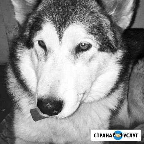 Красавица для фотосессии Ярославль
