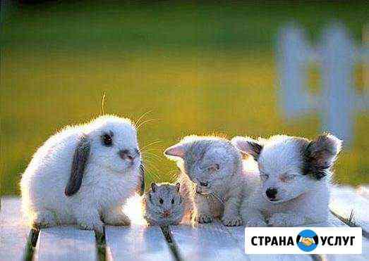 Передержка домашних животных Калининград