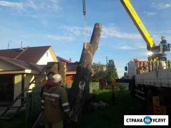 Спил деревьев, кронирование Соликамск
