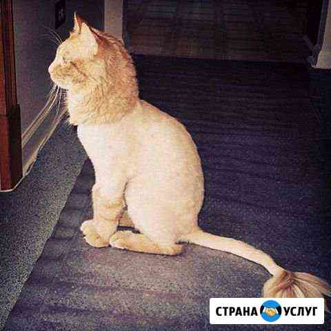 Стрижка животных Азов