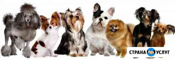 Передержка собак мелких пород Оренбург