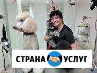 Стрижка собак и кошек в Калининграде Калининград