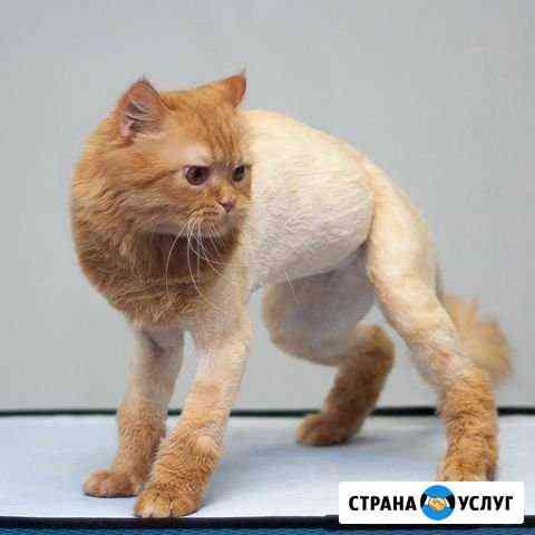 Груминг собак и кошек Новосибирск