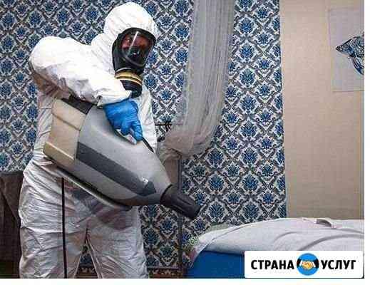 Уничтожение клопов, тараканов. Дезинсекция Новосибирск