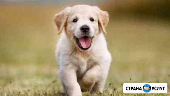 Выгул собак Томск