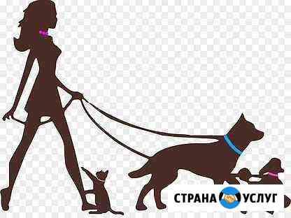 Выгул собак Кимры