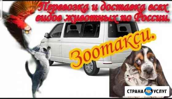 Зоотакси. перевозка всех видов животных Выселки