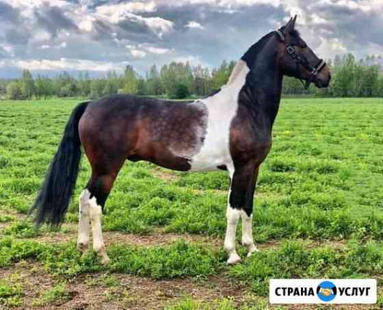Фото с лошадьми Москва