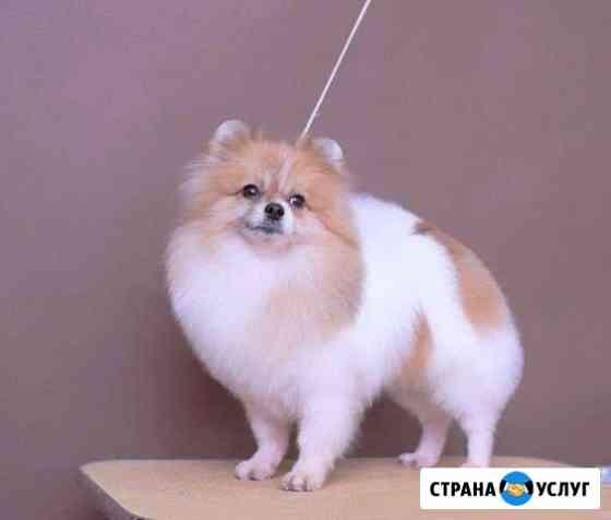 Стрижка собак и кошек (груминг) Ярославль