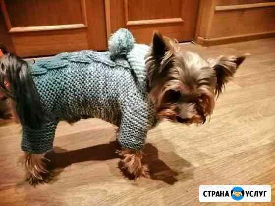Вязаная одежда для собак на заказ Таганрог
