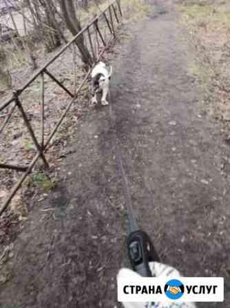 Выгул собак Мурманск
