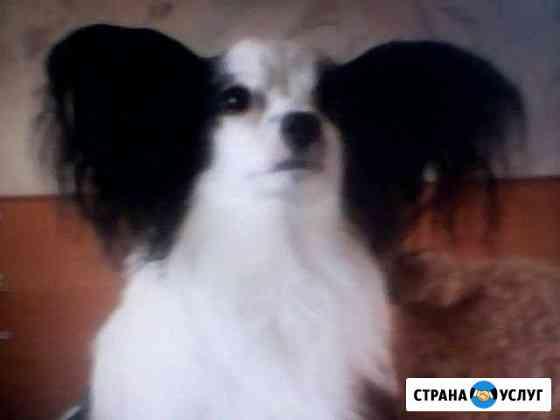 Передержка домашних животных Тольятти