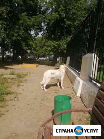 Передержка собак Москва