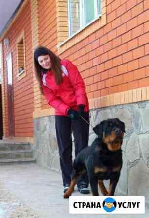 Хэндлер, подготовка вашей собаки к выставке Курск