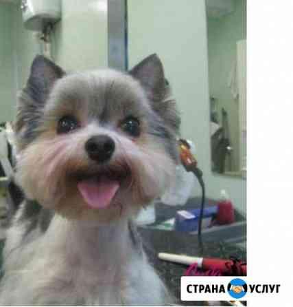 Груминг собак и кошек Углич