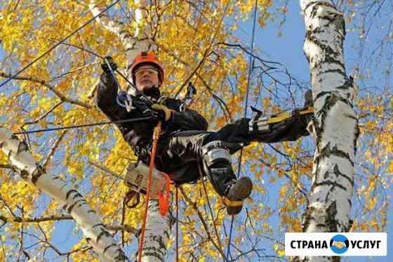 Профессиональный спил деревьев любой сложности Тверь