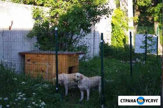 Передержка собак, гостинница для животных Симферополь