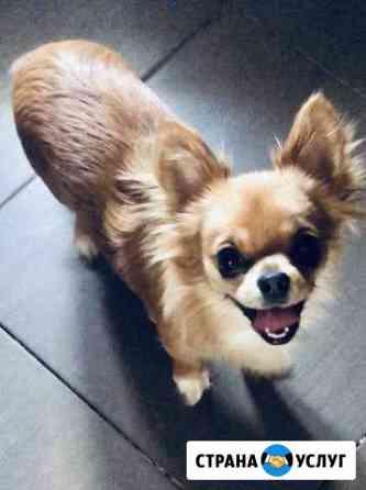 Передержка маленьких собак Домодедово