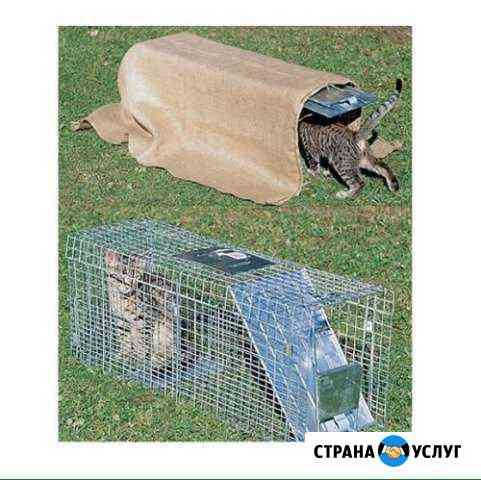 Аренда Котоловка / кошколовка / поймать кошку Нижний Новгород