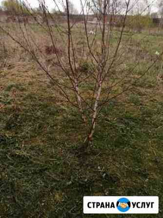 Скос травы спил кустов, септики Смоленск