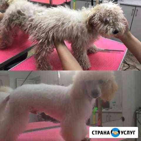 Стрижка собак и кошек хвоsтатый модник Усолье-Сибирское