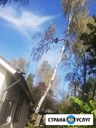 Спилить дерево Архангельское Обрезка деревьев Архангельское