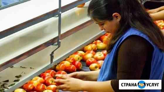 Сортировщик-фасовщик яблок Липецк