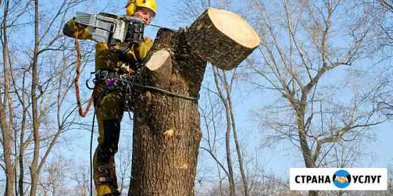 Спил обрезка кронирование вырубка деревьев Калининград