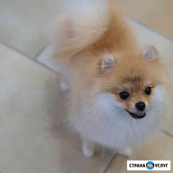 Стрижка собак на дому Санкт-Петербург