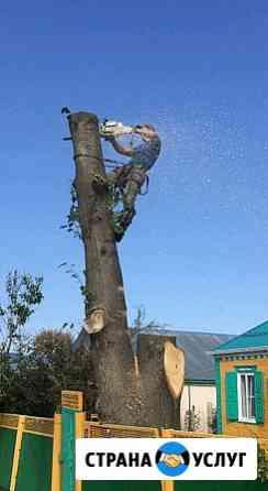 Спил деревьев любой сложности Лабинск